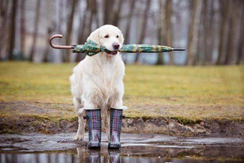 Lisa 226 Doggie-in-the-rain_iStock_000034808008Large-copy