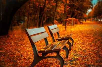 Lisa 284 - bench-fall-park-rest-40884